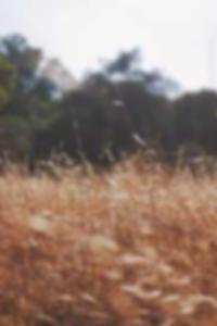 Bbw اباحي انظر الإباحية صفحة أفلام Xxx 7